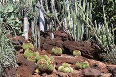 Free Cactus Garden Stock Image - 34967601