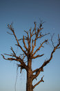 Free Dry Tree. Royalty Free Stock Image - 34971176
