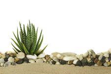 Free Little Cactus Royalty Free Stock Photo - 34977205