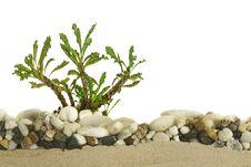 Free Little Cactus Stock Photo - 34977230
