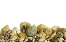 Free Sea Shells Stock Image - 34977261