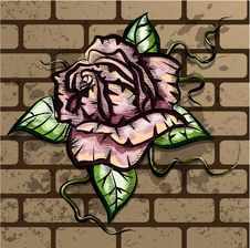 Free Rose On The Wall Stock Photo - 34978250