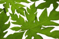Free Papaya Leaves Background Royalty Free Stock Image - 34983876
