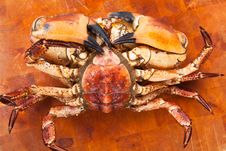 Free Fresh Raw Edible Brown Sea Crab Face Down. Close Up. Royalty Free Stock Image - 34987546