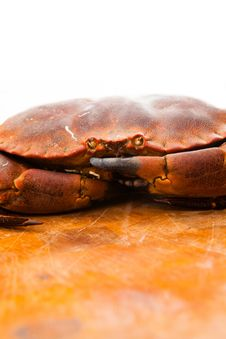 Free Fresh Raw Edible Brown Sea Crab. Close Up. Stock Photo - 34987580