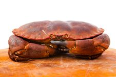 Free Fresh Raw Edible Brown Sea Crab. Close Up. Stock Photos - 34987623