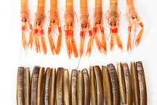 Group Of Fresh Norway Lobsters And Razor Shells. White Backgroun Royalty Free Stock Photo