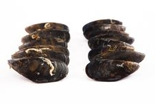 Free Raw Galician Mussels. White Background. Royalty Free Stock Image - 34987816