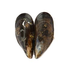 Free Two Mussels Forming A Heart. Love Or Health Concept. Royalty Free Stock Image - 34987826