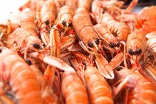 Free Fresh Norway Lobsters Close Up. Soft Focus. Royalty Free Stock Image - 34987836