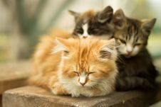 Free Three Little Kitten In The Village Stock Photography - 34988032