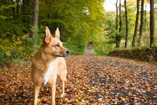 Free Dog On Path Stock Photo - 34988070