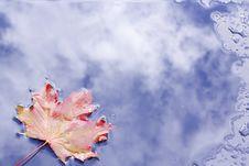 Free Ahornblatt Maple Leaf Royalty Free Stock Photo - 34988095