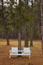 Free A Park Bench Under A Pine Tree Royalty Free Stock Photo - 34991755