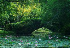 Free Lotus Pond Stock Image - 34994301