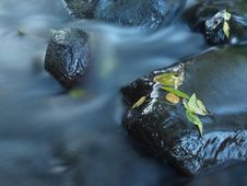 Free Broken Twig On Wet Stone Below Increased Water Level. Royalty Free Stock Images - 34999329