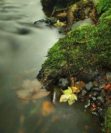 Free Orange Beech Leaves On Mossy Stone Below Increased Water Level. Royalty Free Stock Image - 34999336