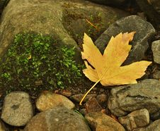 Free Orange Beech Leaves On Mossy Stone Below Increased Water Level. Stock Image - 34999351