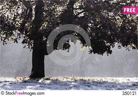 Free Frosty Morning Stock Image - 350121