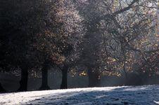 Free Frosty Morning Royalty Free Stock Photo - 350125