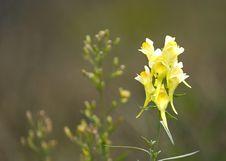 Free Yellow Wild Flower Stock Image - 355071