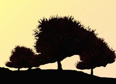 Silhouette Of Oak Tree Royalty Free Stock Photography