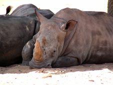 Free Rhino Stock Image - 355691