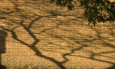 Free Tree Shadow In Brick Wall Stock Photos - 355883