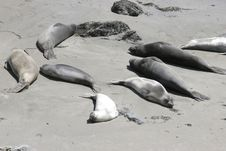Free Relaxing Seals Stock Photography - 356762