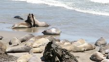 Free Relaxing Seals 2 Royalty Free Stock Photos - 358798