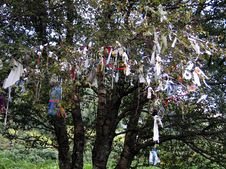 Free Wishing Tree Stock Photos - 358803