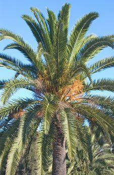 Free Palmtree Stock Photo - 359180