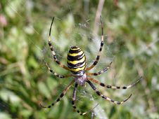 Free Spider Royalty Free Stock Photo - 359605