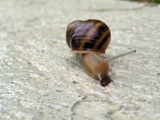 Free Snail Stock Photos - 359613