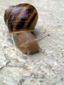 Free Snail Royalty Free Stock Photos - 359638