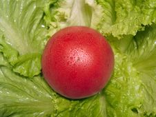 Free Tomato 2 Royalty Free Stock Image - 359686