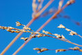 Free DRY GRASS Royalty Free Stock Photo - 3502065