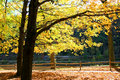 Free The Foliage Scenery Royalty Free Stock Images - 3503139