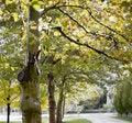 Free Tree-lined Sidewalk Stock Images - 3505084
