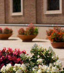 Free Flowerpot Royalty Free Stock Images - 3500259