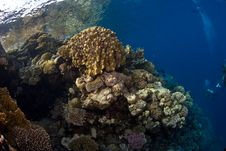 Coral Reef Under The Surface Royalty Free Stock Photography