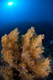 Free Soft Coral Stock Photo - 3501220