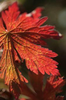 Free Extraordinary Sunlit Stock Image - 3501261