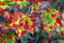 Free Fall Leaves Royalty Free Stock Image - 3501346