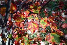 Free Fall Leaves Royalty Free Stock Image - 3501396