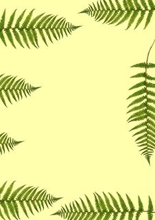 Free Seven Fern Leaves Royalty Free Stock Photos - 3502018