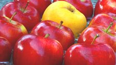 Free Apples Stock Photo - 3502340