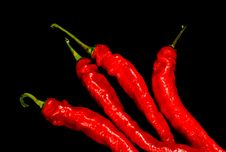 Free Red Hot Chili Peppers Royalty Free Stock Photography - 3502587