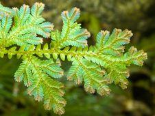 Free Bluish Green Leaves Stock Photos - 3503343