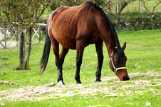 Free Horse Stock Photos - 3504103